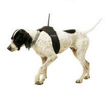 датчик DC 20 на собаке